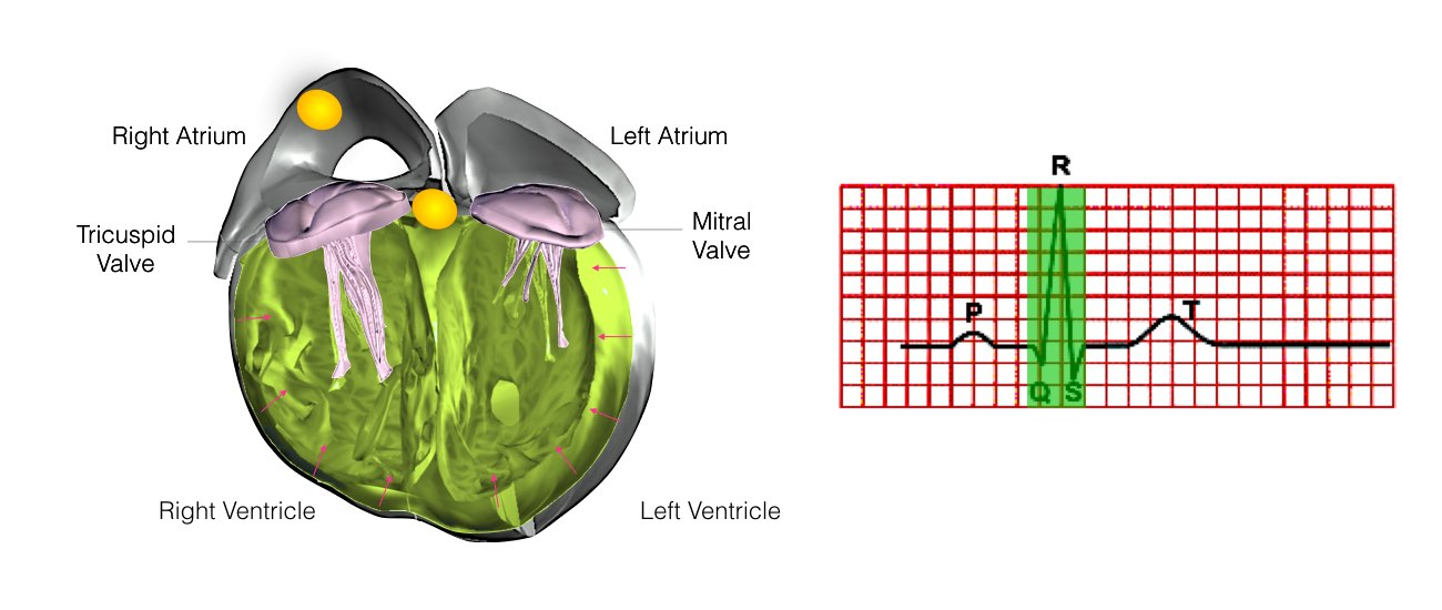 Normal Heart Function example 7